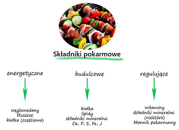 składniki pokarmowe
